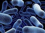bacilus-bakterium_x110